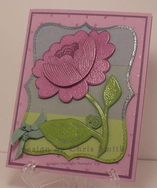Plum bella rose