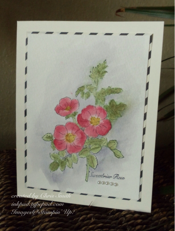 Watercolored Sweetbrair Rose on Typeset by Chris Smith; inkpad.typepad.com