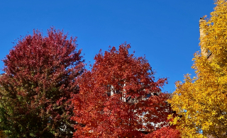 October 10 trees